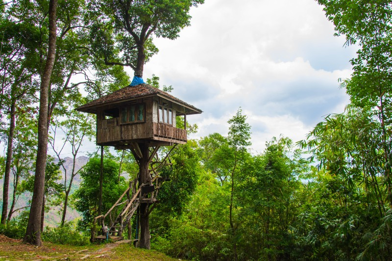 Unusual type of house: tree house